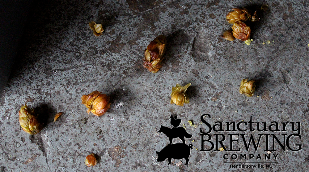 Hops on the Sanctuary Brewery floor.