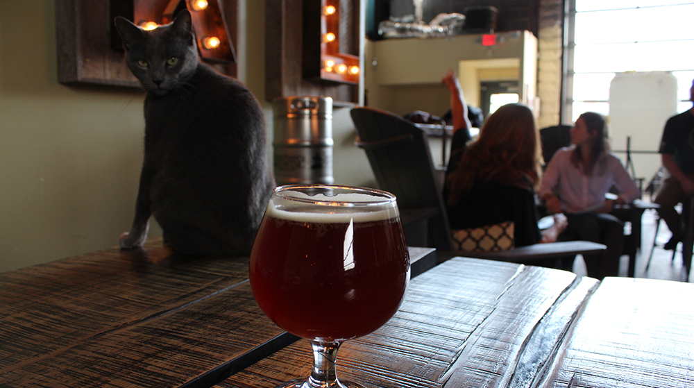 Suds the Cat watching over a growler of beer