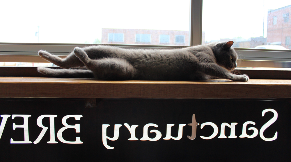 Suds laying on one of the bar tables.