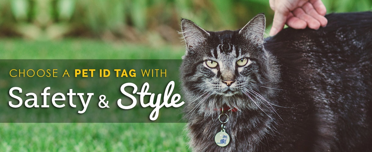 Choose a Cat ID Tag with Safety and Style