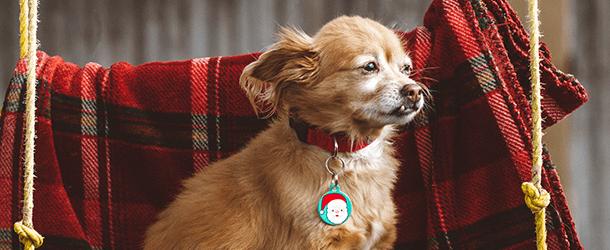 Home Page Banner Dog Christmas 2018 -  mobile