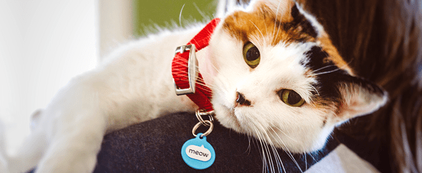 June Home Page Banner Cat - mobile