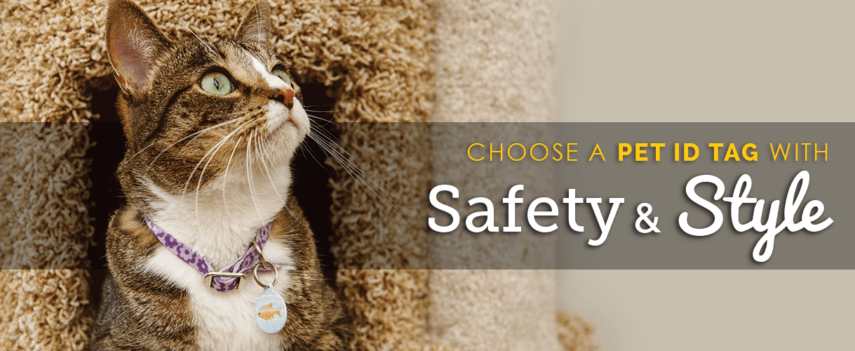 Indoor Cat Summer Home Page Banner 2018