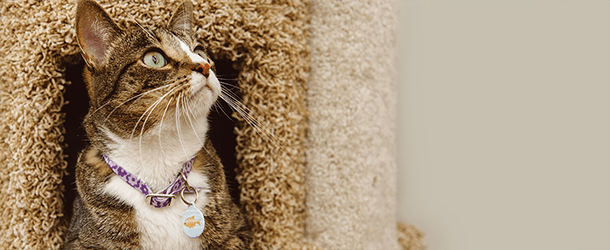 Indoor Cat Summer Home Page Banner 2018 - mobile