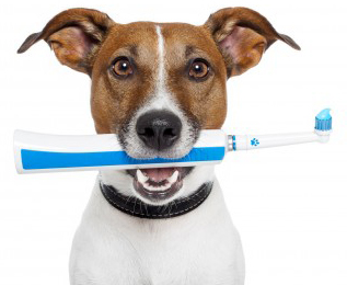 Bad Breath in Dogs