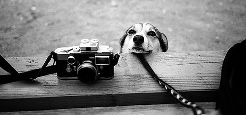 10 Simple Pet Photography Tips Dog Tag Art