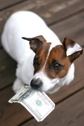 Safe Pet Care Cost Cutting Tips