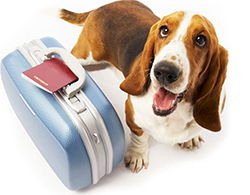 6 Tips for Pet Care When You're Away on Vacation