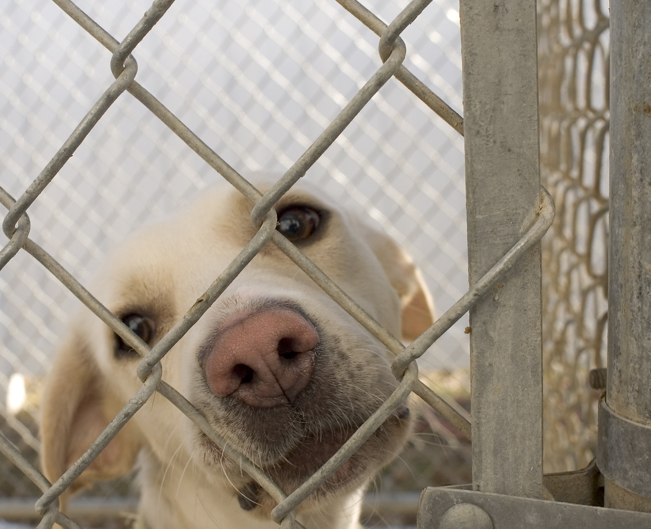 Common Problems with Rescue Dogs