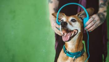 best music for dogs