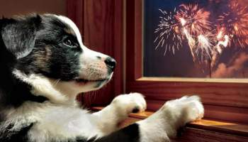 dogs scared fireworks