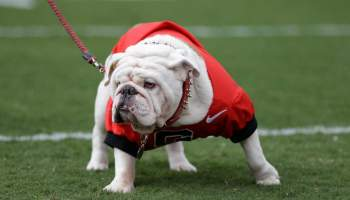College Football Mascot Dogs