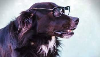 Dog Memory