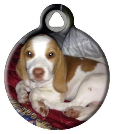 """Lily """"Our"""" Beagle"""