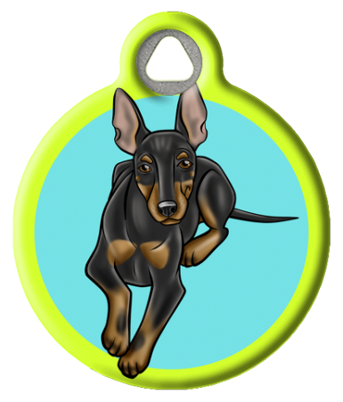 Manchester Terrier on Blue and Yellow