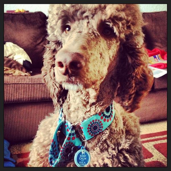 dog tag art custom pet id tags dog collars and leashes