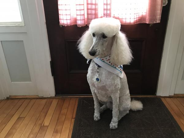 AKC Canine Good Citizen®   Dog Tag Art