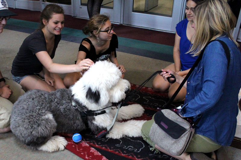 Therapy Dog Winston and students